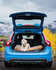 Lab in Aspen (tobyharriman) Tags: 2017 645z fall labrador yellowlab adventure animals art artist aspen attractions autumn car co color colorado custom dog fallcolors fineart landscape lifestyle mountain october outdoor pentax photographer photography photos pictures prints sanfrancisco timelapse tobyharriman travel trees yellow volvo v60 polestar
