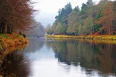 Winter on the Tay (eric robb niven) Tags: ericrobbniven scotland dunkeld perthshire walking rivertay winter trees