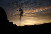 Dawn at Bell Rock - yukka plume (nikname) Tags: flowers bellrock sedona arizona sunrise redrocks arizonausa arizonaredrocks bellrocksedonaarizona daw