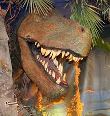 Tyrannosaurus (William Sc) Tags: dinosaur tyrannosaur