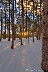 Red Pine ... winter sunburst (Ken Scott) Tags: leelanau michigan usa 2017 february winter 45thparallel hdr kenscott kenscottphotography kenscottphotographycom freshwater greatlakes lakemichigan sbdnl sleepingbeardunenationallakeshore voted mostbeautifulplaceinamerica sunset redpine snow shadow