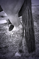 Douche (PhotOw'graphie) Tags: horse cheval poney quitation