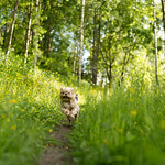 Dog path thumbnail