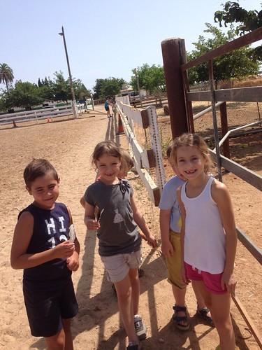 Horses_The Paula Method_4