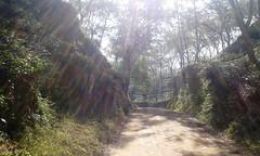 Nature & Beauty (hamidurucep) Tags: srimongal naturebeauty beautyfulbangladesh