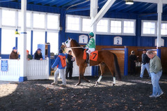 2016-12-02 (10) r3 Yomar Ortiz on #7 Tigers Bop (JLeeFleenor) Tags: photos photography md maryland marylandracing marylandhorseracing laurelpark racing track racetrack jockey   jinete  dokej jocheu  jquei okej kilparatsastaja rennreiter fantino    jokey ngi horses thoroughbreds equine equestrian cheval cavalo cavallo cavall caballo pferd paard perd hevonen hest hestur cal kon konj beygir capall ceffyl cuddy yarraman faras alogo soos kuda uma pfeerd koin    hst     ko  paddock outside outdoors yomaroortiz