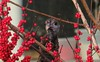 IMG_6214c (Naturecamhd) Tags: canonpowershotsx60hs sx60hs newyorkbotanicalgarden nybg botanicalgarden nature green eco bronx thebronx birding bird birds wildlife turkey wildturkey visitorcenter