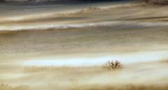 Early morning fog (maria xenou I photodromos) Tags: wetter westernpeloponnese peloponnese peloponnes nature natur morning mediterranean morgens mittelmeer mist misty mistymorning moments momente tree baum felder fields morgennebel nebel ομιχλη πελοποννησοσ στιγμεσ πρωι μεσογειοσ φυση δεντρο weather winter canoneos1100d photodromos fotodromos minimal