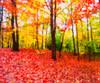 Wonderland (explored) (Sandeep_Nigam) Tags: velvia explore