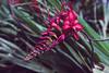 (Ailís Ní hÉgeartaigh) Tags: flowers flower pink green greenery colour colorful