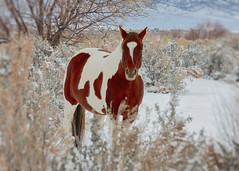 Hey Pal - Here's my long tail of whoa ........ (explored) (Parowan496) Tags: horse snow winter animals landscape farmanimal cold mountains farmland atailofwhoa talkinghorse ngc npc coth coth5