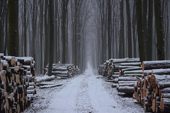 winter in the forest (JoannaRB2009) Tags: las forest woods tree trees winter mist for snow white black road path nature lasjaninowski łódzkie lodzkie polska poland landscape ♡