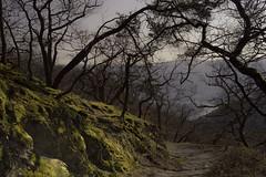 Trellis of Trees (Netsrak) Tags: spay rheinlandpfalz deutschland de rhein rhine tree trees baum bäume moos moss flechte lichen capture