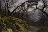 Trellis of Trees (Netsrak (on/off)) Tags: spay rheinlandpfalz deutschland de rhein rhine tree trees baum bäume moos moss flechte lichen capture