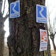 Rheinsteig und Saynsteig