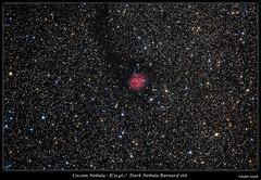The Cocoon Nebula & Barnard 168 (Ralph Smyth) Tags: ic5416 cocoonnebula barnard barnard168 cygnus astrometrydotnet:id=nova1858745 astrometrydotnet:status=solved