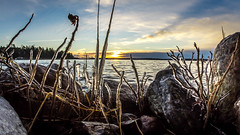 Ice (Jens Haggren) Tags: olympus samyang75mm ice sun sunset sea seascape water sky clouds plants rocks landscape värmdö sweden jenshaggren