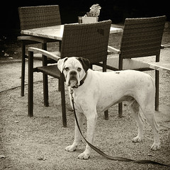 Reserved table watchdog (andzwe) Tags: zwolle brasseriehetvliegerhuys reservedtable watchdog terrace terras monochrome overijssel fundatie brasserie vliegerhuys reserved gereserveerd