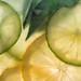 Citrus+Delight