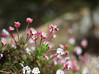 Memories of Last March! (janroles) Tags: nature serene fordeabbey fleur canoneos400d dof bokeh flickr england garden plants may spring