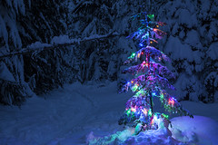 Oh Christmas Tree (Zeb Andrews) Tags: christmastree trilliumlake mthood oregon winter twilight