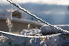 Clothes Lines (Man in Hat Photography) Tags: clotheslines winter snow