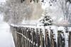 "snow (Ibi Szabo"") Tags: nikond7000 allrightsreserved snow 2016 madison wi winter wood fence dof tree"