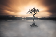 The Lonely Tree (devlin11) Tags: loch lomond millarrochy tree lone lonely scotland scenery sunrise deserted morning magic mountains nikon exposure sky d810 tranquil travel