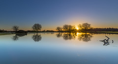 January Blues (nicklucas2) Tags: reflection water pond janesmoor tree landscape newforest sunset sun