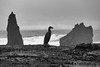 Landschaft auf Reykjanes (Agentur snapshot-photography) Tags: atlanticocean atlantik atlantischerozean coast erdwärme geologie geothermalgebiet geotherme geothermie halbinsel iceland island jahreszeiten kontinatalverschiebung küste küstenregion küstenverlauf landscape landschaft landschaften landschaftsaufnahme lava lavafeld lavagebiet meer meeresküste natur nordatlantik nothernatlantic reykjanes sea sehenswürdigkeiten vulcano vulkan vulkanaktivität vulkangebiet vulkanlandschaft winter wintertime lavagestein tourismus brandung wetter abend abendlich abends evening abendlicht abenddämmerung dämmerungsaufnahme dämmerung dawn dusk twilight abendrot abendsonne sonnenuntergang abendhimmel figur vogel skulptur sandvik suthurnes isl