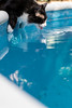 _DSC2254 (julianmartinez_) Tags: cat buddy thirsty pool summer water nikon friend