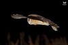 Coruja-das-torres, Barn Owl (Tyto alba) (xanirish) Tags: corujadastorres barnowltytoalbanunoxavierlopesmoreira ngc xfx35 national geographic wildlife nuno xavier moreira wwwvidaselvagemnoturnapt selvagem owls corujas birds prey night aves portugal lezirias rapina nocturnas noturnas tytoalba barnowl commonbarnowl