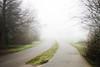 Misty Road in Stanley Park (Asher Isbrucker) Tags: stanleypark park green grass road mist fog foggy misty ominous mysterious gray vanishingpoint