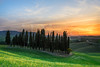 Sunset over cypress trees in Tuscany (iPics Photography) Tags: cypress sunset tuscany trees cypresses group landscape valdorcia orcia nature torrenieri flowers yellowflowers dusk italy italian hills grove forest sanquirico