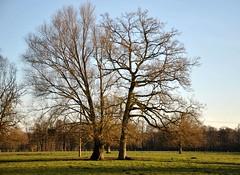Deux arbres en hiver (FleurdeLotus28) Tags: nature landscape paysage eureetloir champ land countryside arbre tree two twobytwo winter hiver light branche nikon