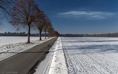 Tree avenue in January (KF-Photo) Tags: allee asphalt bäume baumallee einsiedel fönwolke fluchtpunkt perspektive randstreifen schnee strase