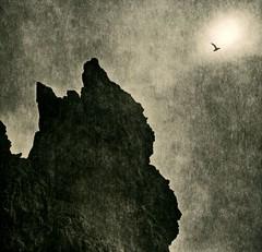 Iceland_Bird (johnbridgesphotography) Tags: wolfgangmoersch hasselblad lith iceland