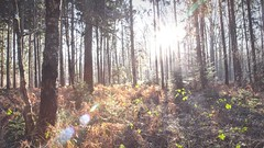 My Favorite Places are in this Forest ❣ Sunlight Sunbeam Lens Flare Landscape_Collection Forestwalk EyeEm Nature Lover Nature's Diversities Showcase: February Plants And Flowers TreePorn 3XSPUnity I LOVE PHOTOGRAPHY Simple Quiet Love EyeEm Gallery Wintert (youbooth.de) Tags: favoriteplaces forest sunlight sunbeam lensflare landscapecollection forestwalk eyeemnaturelover naturesdiversities showcasefebruary plantsandflowers treeporn 3xspunity ilovephotography simplequietlove eyeemgallery wintertime germany canon fullframe milesaway naturelovers lieblingsteil fallbeauty