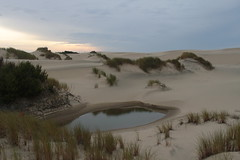 The dunes were just asking for an after dinner walk (rozoneill) Tags: beach oregon forest coast florence baker outdoor hiking dunes trail national backpacking area recreation siuslaw wsweekly140