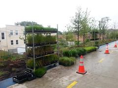 Grasses planting begins on the west end
