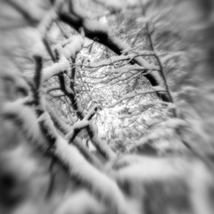 Nether Wood 79 - Deep (Adam Clutterbuck) Tags: wood uk greatbritain england blackandwhite bw tree monochrome lensbaby square landscape mono blackwhite unitedkingdom britain somerset bn elements gb bandw sq mendips charterhouse undergrowth nether greengage netherwood adamclutterbuck sqbw bwsq showinrecentset
