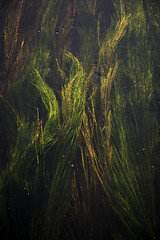 The River (richardsmith155) Tags: plants sunlight water river flow weeds running bugs avon flys