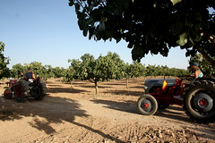 IMG_0402 (ACATCT) Tags: old españa tractor spain traktor agosto toledo antiguo massey pistacho tembleque barreiros 2015 bustards perdices liebres avutardas ff30ds r350s