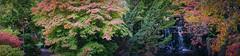 Japanese Gardens (RobMacPhotography) Tags: landscapes japanese gardens hobart autumn tasmania australia red yellow green waterfall pathway sony a6000 rob mac photography panorama fall royal botanic