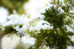 let it snow (Katrinitsa) Tags: snow winter glyfada athens greece white green garden nature bokeh focus zoom beauty amazing cold chilly landscape colors colored trees tree leaves plants awesome nice dream dreamy beautiful morning inspiring inspiration inspired happy joy snowy ef35mmf14lusm canon