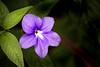 Ice Crystal Flower 3-0 F LR 1-5-17 J026 (sunspotimages) Tags: flower flowers nature purple lavender