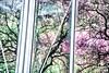 30th December - Anything you like (sminchin1977) Tags: anythingyoulike trees reflection glass windows decemberphotoadaychallenge fmsphotoaday fmspad