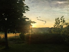 Sunset (Uscè (OFF,OFF!!!!!)) Tags: sunset iphone sky skyline sun texture coppari eugenio uscè backlight birds trees colors clouds spring nature panorama photo perspective country countryside landscape sunray exposure green light italy jesi marche