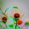 Daisy Bright. (Omygodtom) Tags: wildflower dof daisy flickr flower macro macromonday tamron tamron90mm senery setting scene natural nikon outdoors nikkor d7100 park