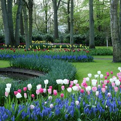 La nature domestiquée *-*-- °-° (Titole) Tags: keukenhof thenetherlands paysbas garden park parc titole jardin nicolefaton tulipes tulips squareformat storybookwinner friendlychallenges challengeyouwinner cyunanimous